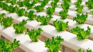 Conheça o caminho para se tornar uma FoodTech